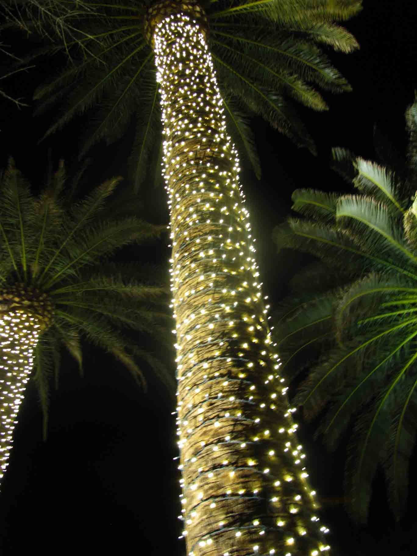 LED lights installed on palm tree by Holiday Decorations in Las Vegas