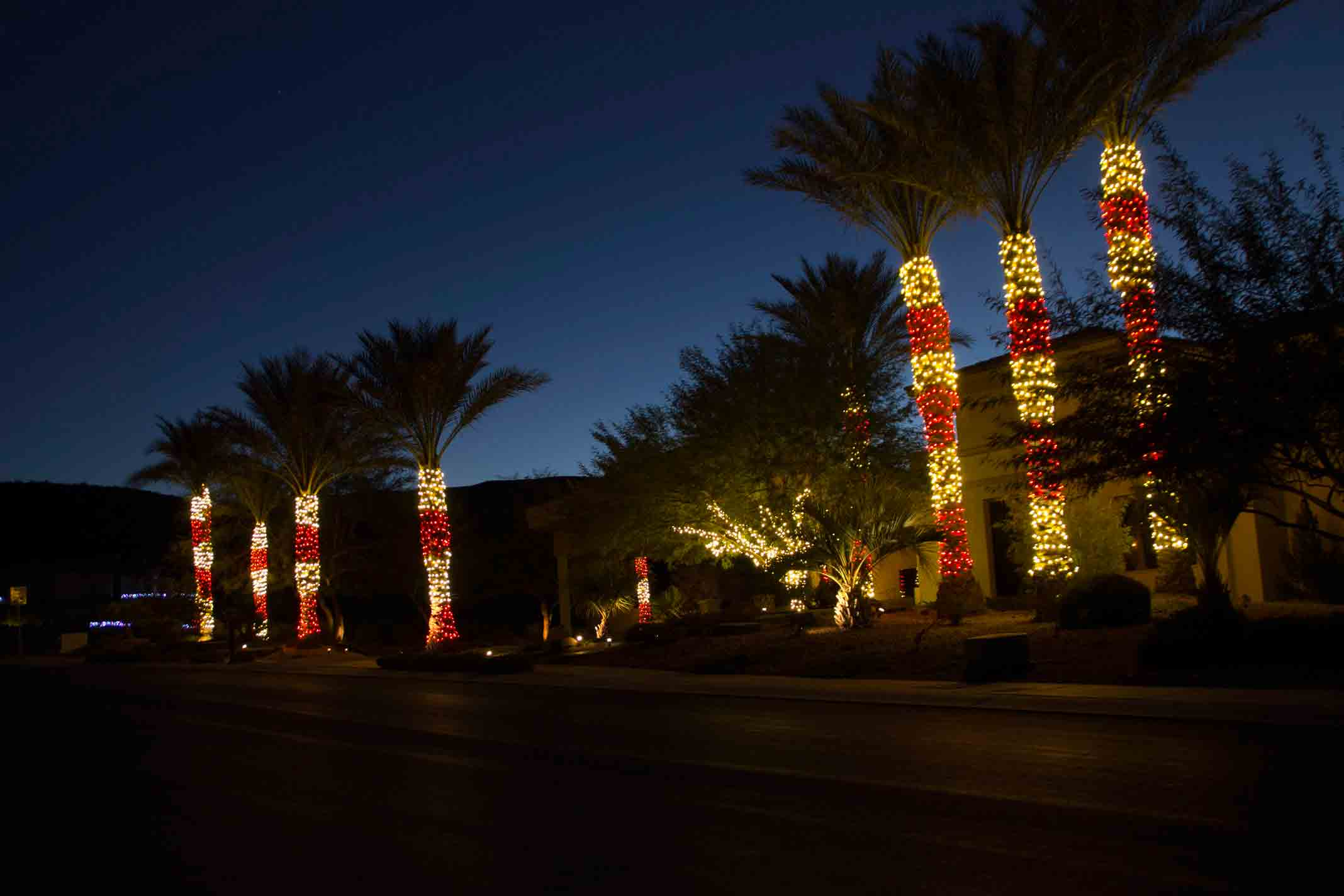 Candy cane palm tree lights by Holiday Decorations in Las Vegas